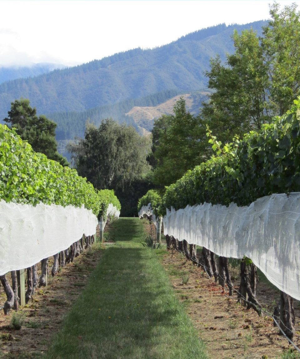 landscape-vine-vineyard-wine-field-countryside-457785-pxhere.com